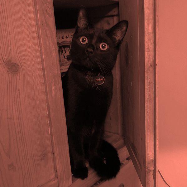 Ben's cat Freddie
